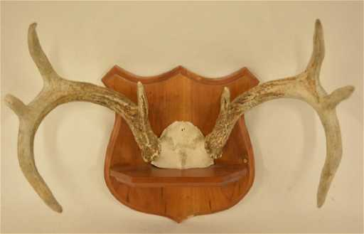 662f9616a31 8-Point Whitetail Deer Skull Mount Wall Plaque