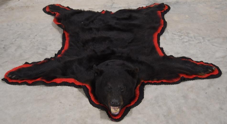 Large Black Bear Full Body Taxidermy Rug