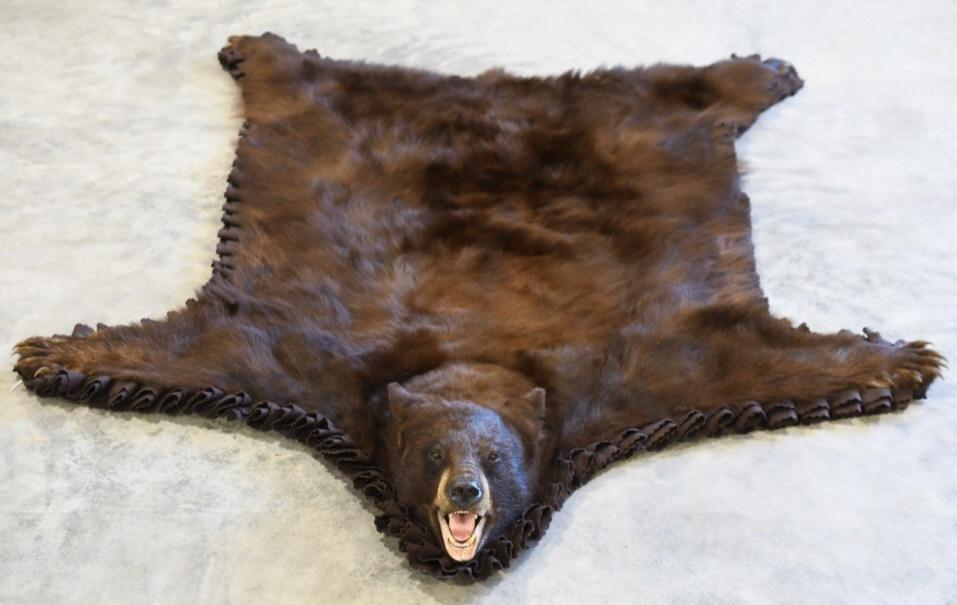 Chocolate Black Bear Full Body Taxidermy Rug