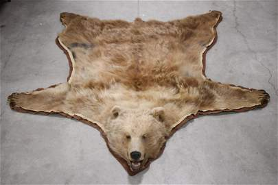 Full Body Golden Kodiak Bear Rug Mount