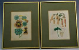 Early Botanical Print Grouping