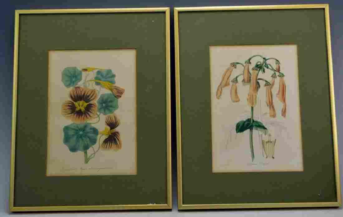 Early Botanical Print Grouping