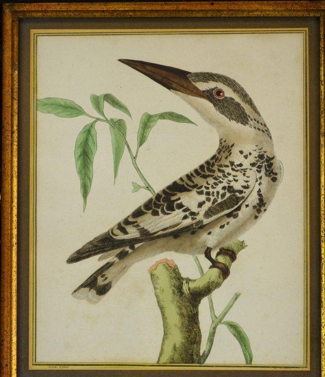 Kingfisher print - 2