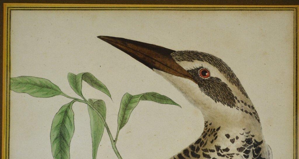 Kingfisher print - 3