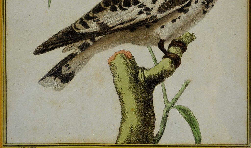 Kingfisher print - 4