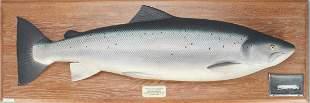 Atlantic Salmon Model, Hardy Brothers (Alnwick) Ltd.