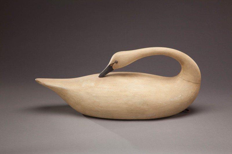 2: Preening Whistling Swan