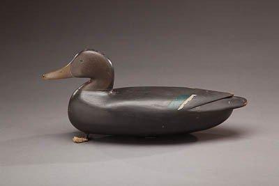 48: Black Duck