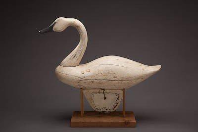 49: Swan