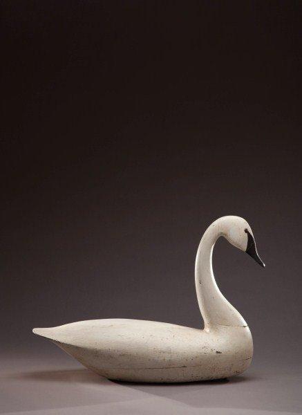 56: Swan - 6