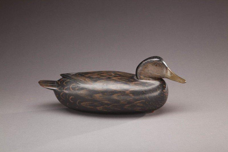 59: Black Duck