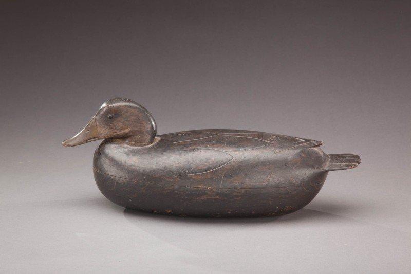 62: Black Duck