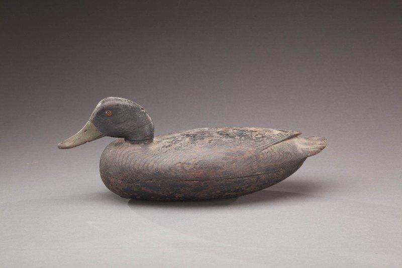 63: Black Duck