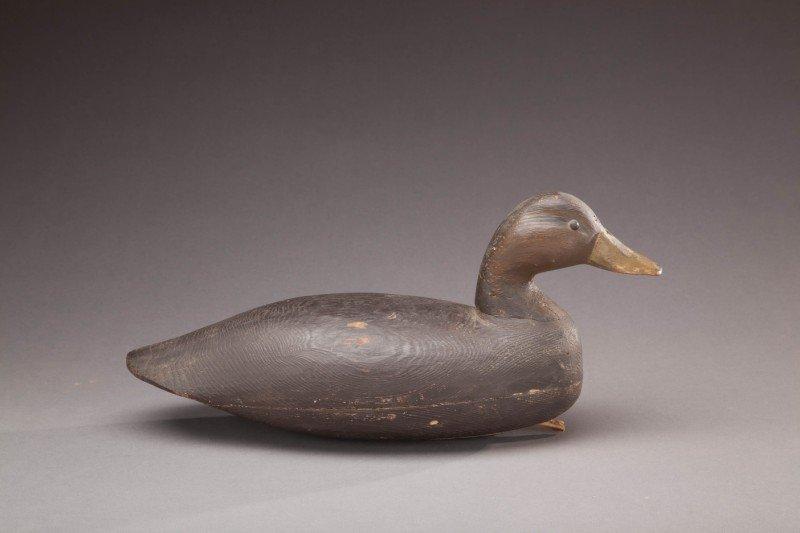 65: Black Duck