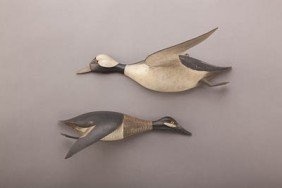 Flying Bufflehead Pair