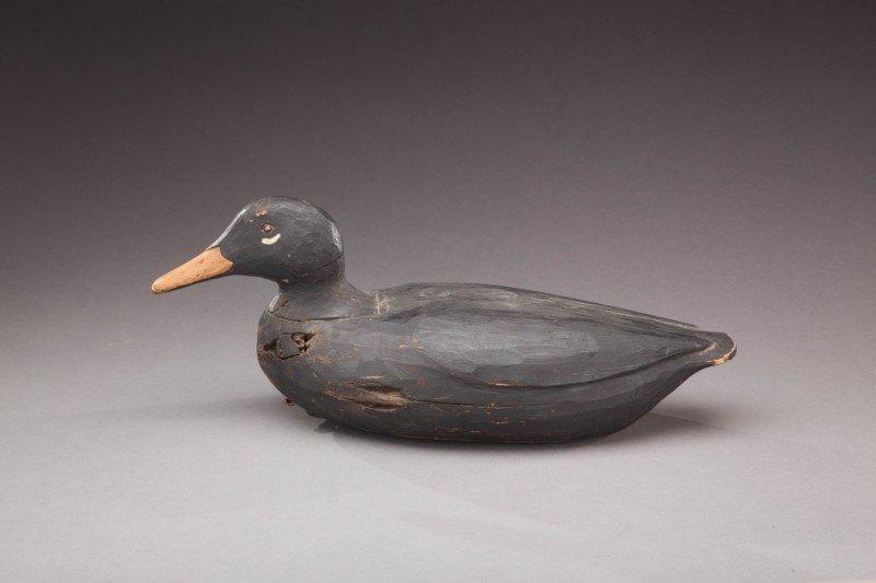 120: Black Duck