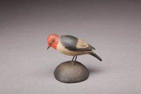 Miniature Red-Headed Woodpecker