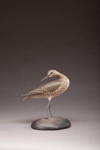 195: Hudsonian Curlew