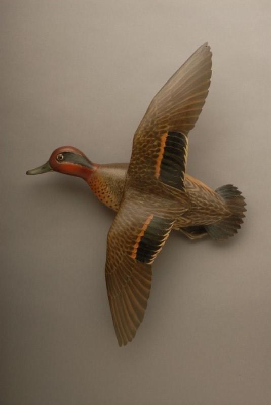 197: Flying Green-Winged Teal Drake