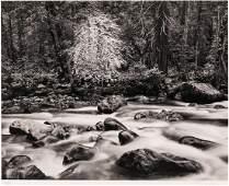John Sexton (b.1953 American) ''Merced River and