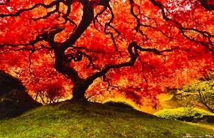 "Peter Lik ""Tree of Life"" (Oregon) Color Photograph"