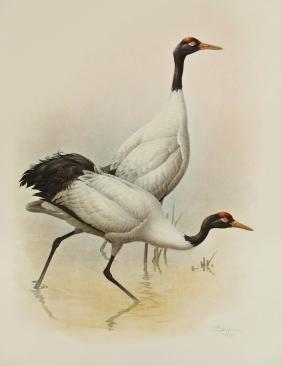 ''Rare Birds of China'' Collotype Print Portfolio by