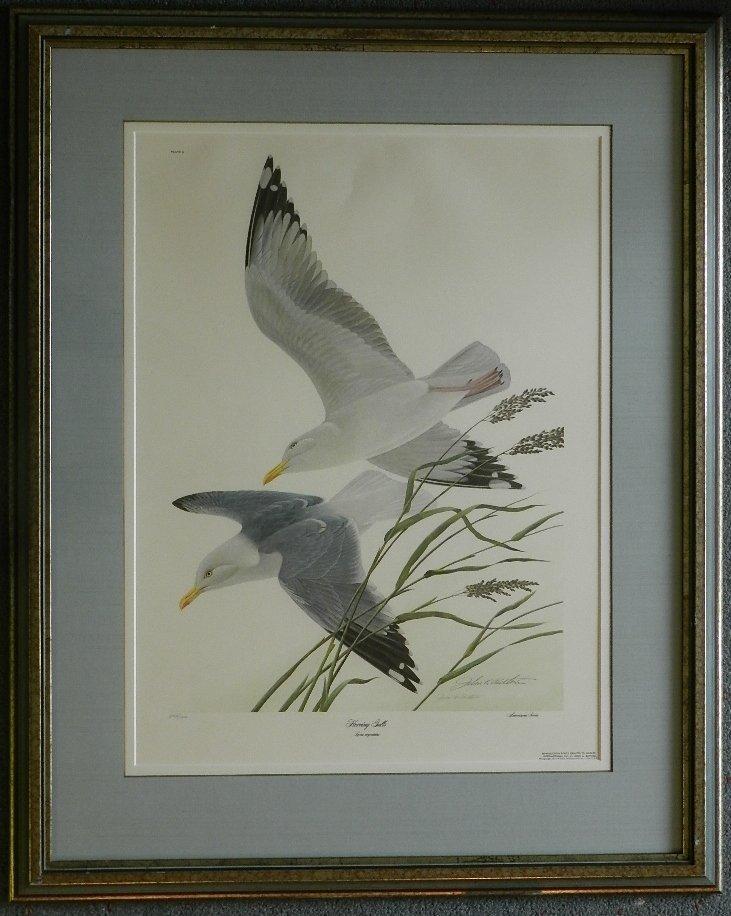 "14: John Ruthiner ""Herring Gulls"" Print Signed/Numbered"
