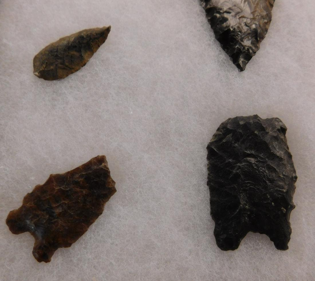 California Paleo Points - 6