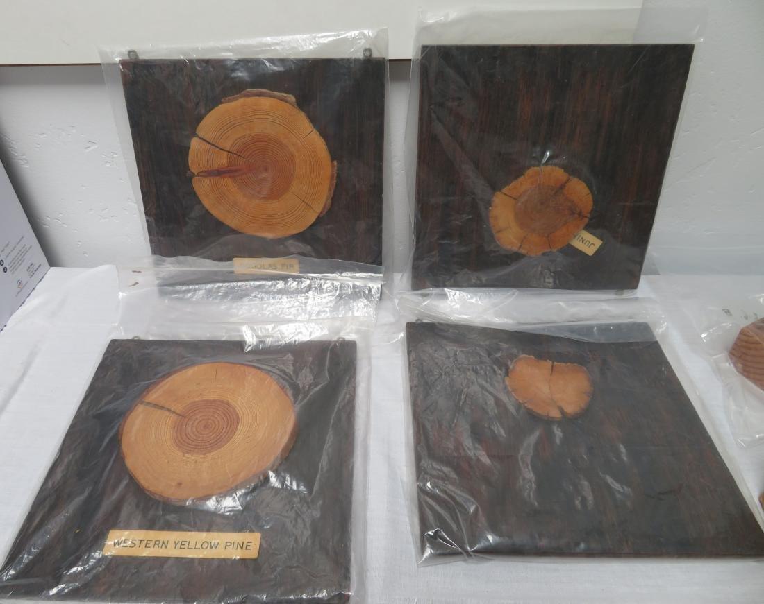 Tree Ring Dating Data & Artifacts - 2