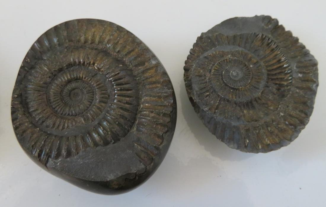 Fossil Collection - 5