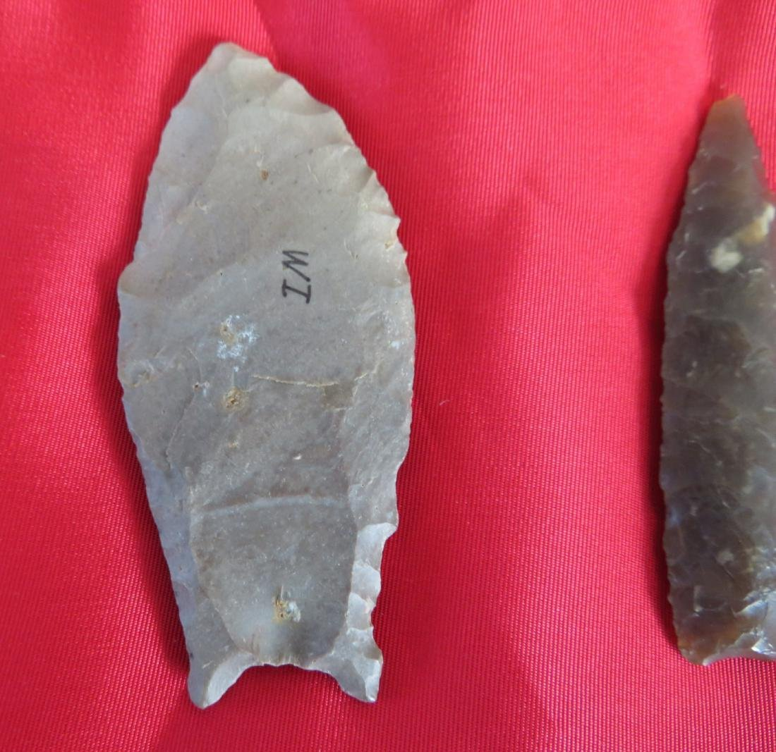 Collection of Paleo Points - 6