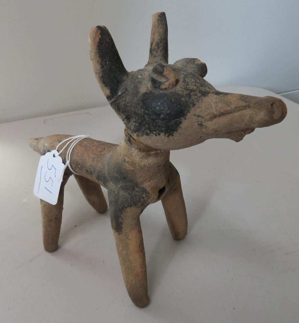 Large Veracruz Dog