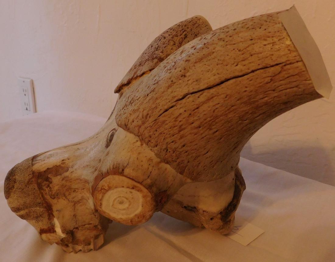 Carved Animal Skull - 5