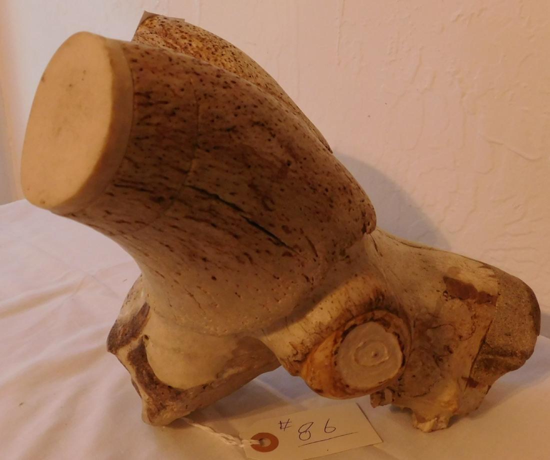 Carved Animal Skull - 7