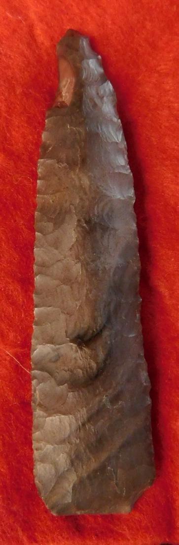 Paleo First View w/Jackson COA - 2