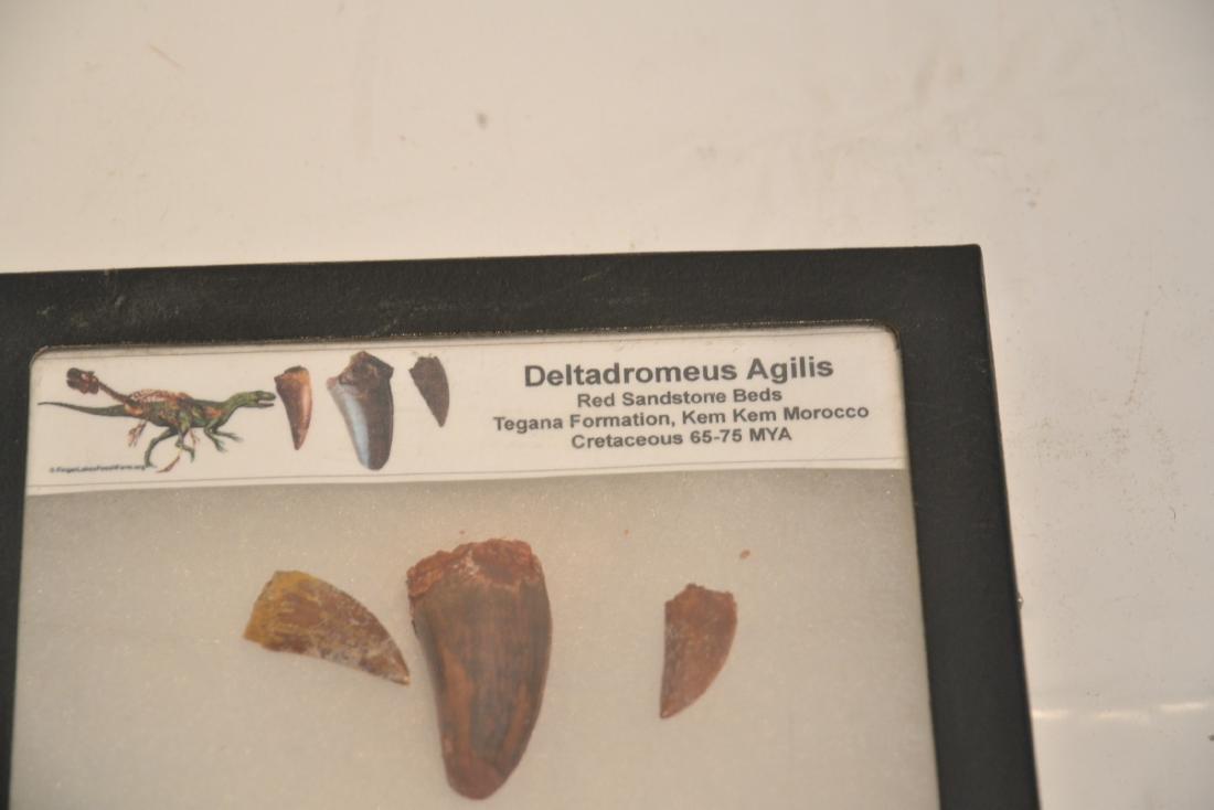 DELTADROMEUS AGILIS , CARCHARODONTOSAURUS - 2