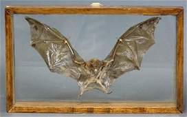 246A: VICTORIAN TAXIDERMY - CASED BAT