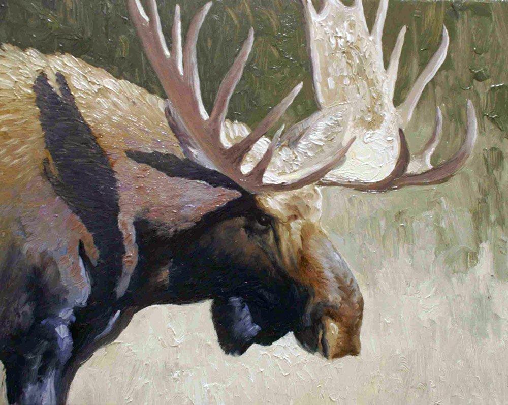 Moose Portrait, by Edward Suthoff
