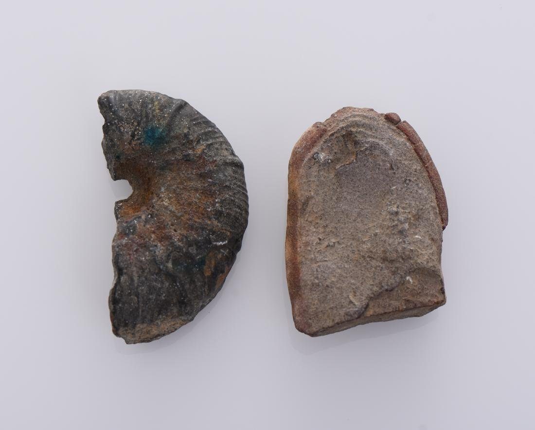 Two Stone Fossils - 2