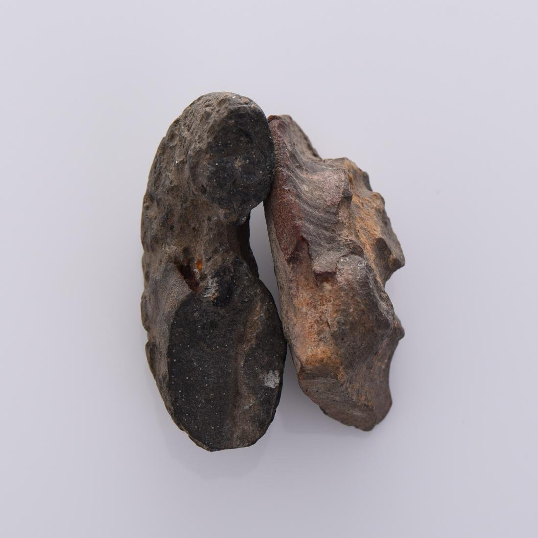 Two Stone Fossils - 3