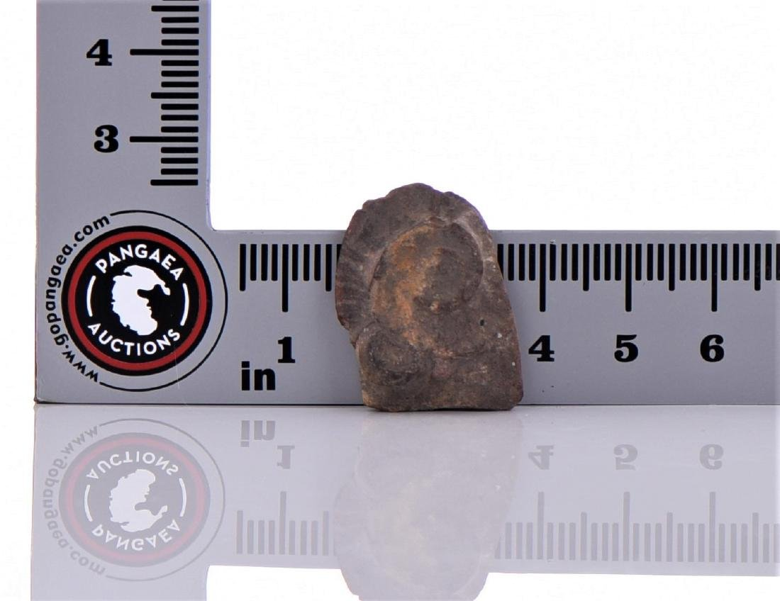 Two Stone Fossils - 4