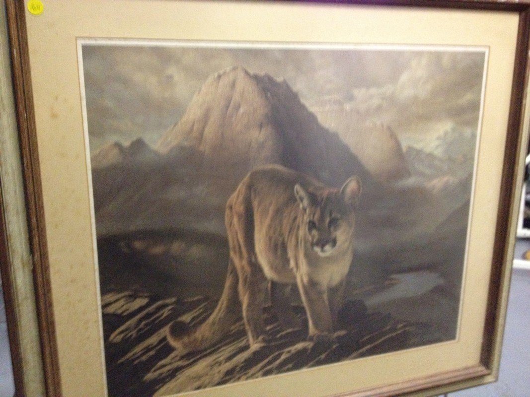 ART - COUGAR - PRINT - SIGNED CHARLES FRACE (LOWER LEFT