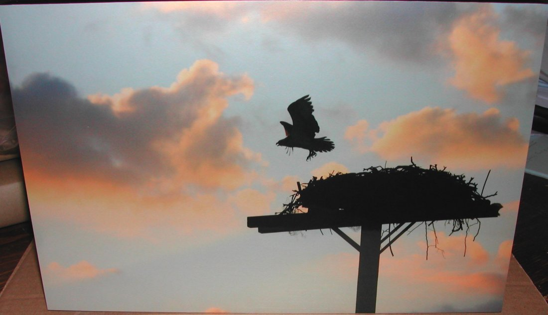 "18: Andrea Pickerell (20th-21st c.).  ""Taking Flight,"""