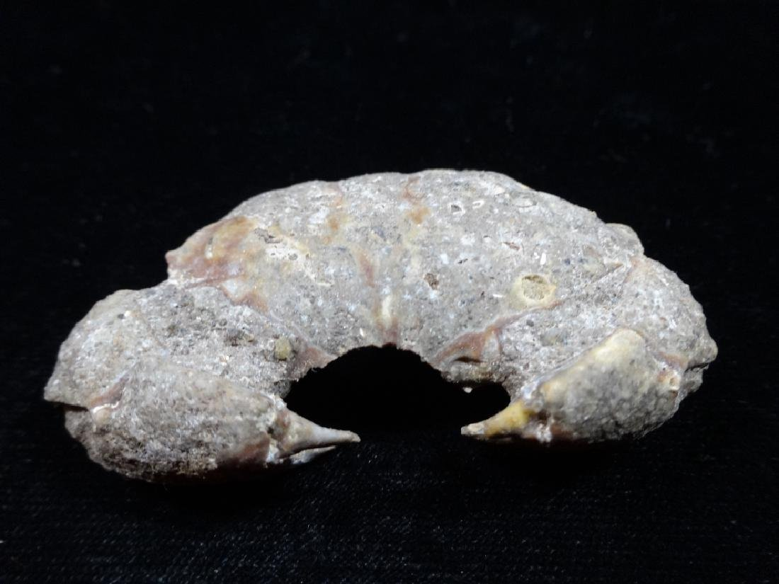 """FOSSIL CRAB, APPROX 2"""" X 1"""""""