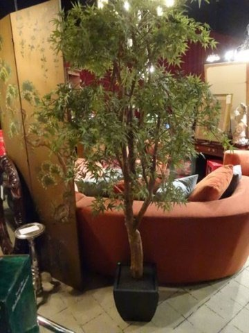 JAPANESE MAPLE SILK TREE IN PLANTER, WOOD TRUNK, VERY