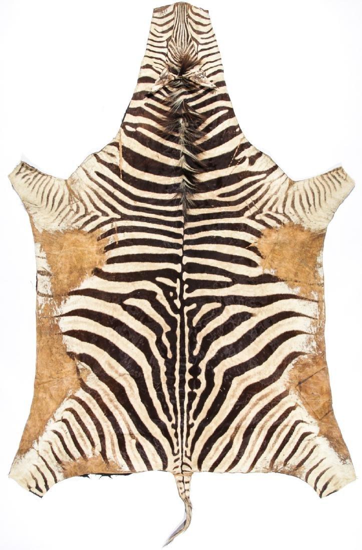 Zebra Hide Rug: 6'4'' x 10'