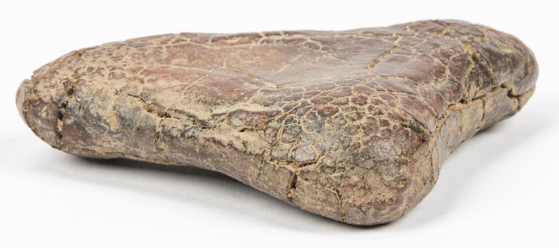 Dinosaur Fossil - 3