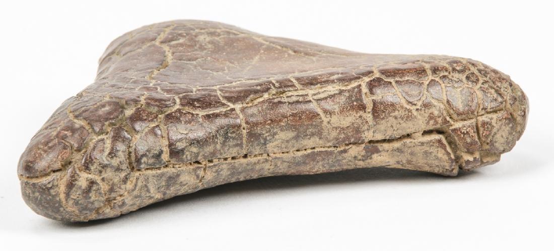 Dinosaur Fossil - 4