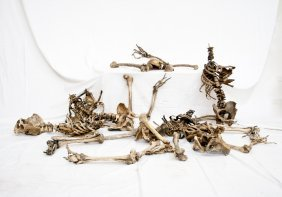 Collection Of Hand-Crafted Human Skeletal Remains