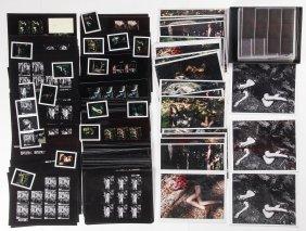 Paul Rowland Studio Photography Archive: 4 Portfolios